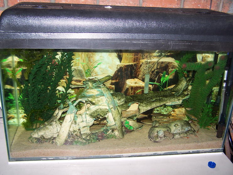 Fish tanks for sale cape town lighting for fish tanks for Custom fish tanks for sale