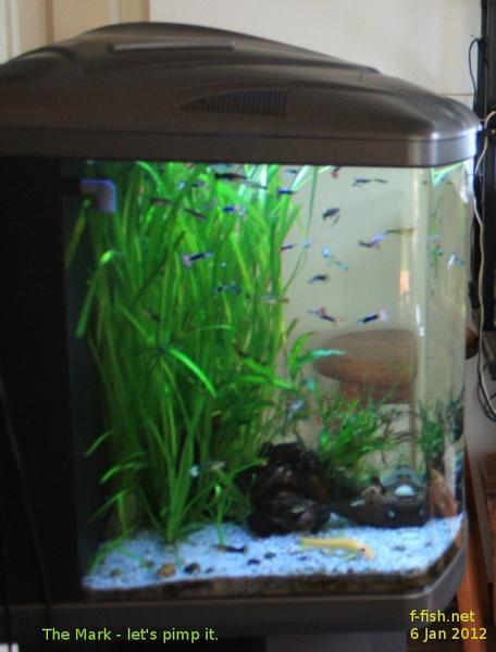 ADA propagation tank - boyu 550 | Tropical Aquariums SA