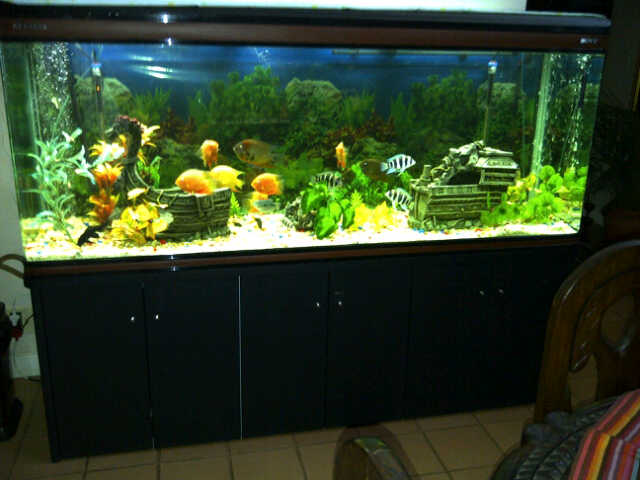 Fish tanks for sale tropical aquariums sa for Fish tanks for sale cheap