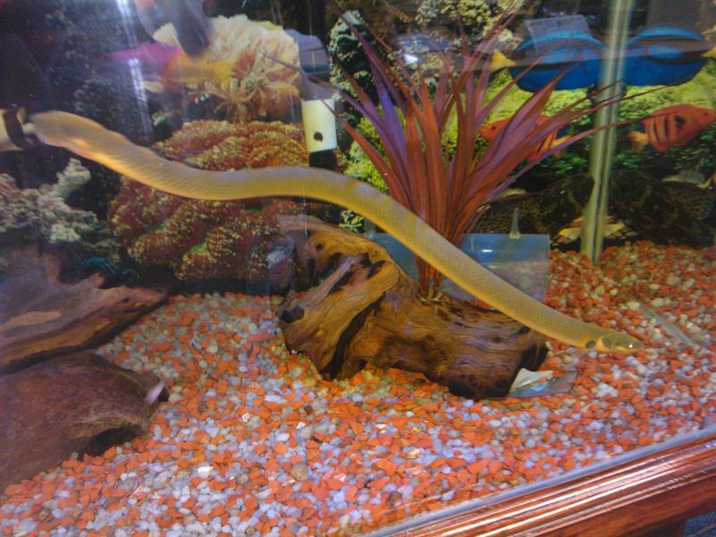Best aquascape and fish competition tropical aquariums sa for African rope fish